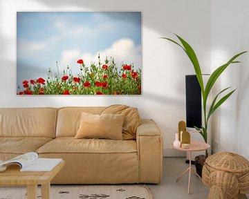 Mohnblumen von Coby Bergsma