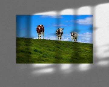 Neugierige Kühe, Friesland von Adelheid Smitt