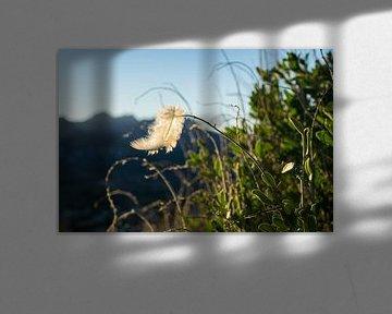 Leichte Feder im Wind von Montepuro