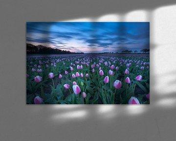 Tulpenpracht in Drenthe van Ron Buist