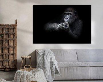 Aufmerksames Gorilla-Weibchen sitzt und hält ihre Hände und macht etwas in der Nähe von ihrem Gesich von Michael Semenov