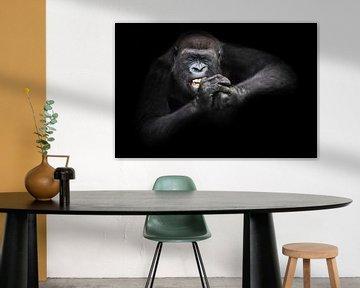 Der Fleiß und die Ausdauer eines weiblichen Gorillas, der mit gefletschten Zähnen und geschlossenen  von Michael Semenov