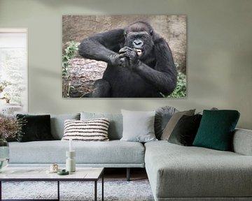 Ein weiblicher Gorilla mit gefletschten Zähnen und schielenden, geschlossenen Augen, der einen harte
