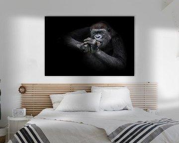 Lustige weibliche Gorilla nagt fleißig etwas hart entblößt ihre Zähne, schraubt ihre Augen von Anstr von Michael Semenov