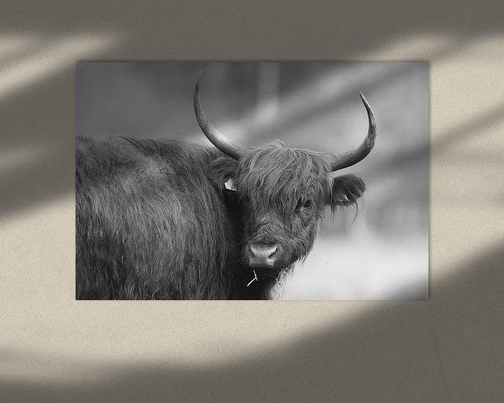 Sfeerimpressie: Schotse Hooglander (Zwart/Wit) van Art Wittingen