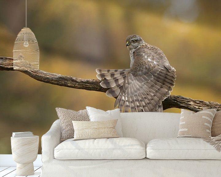 Beispiel fototapete: Sperberweibchen streckt die Flügel aus von Art Wittingen