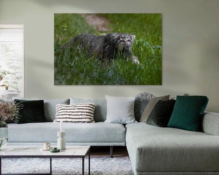Beispiel: Jagd im Gras. Wilde flauschige Katze Pallas' strenger Blick in smaragdgrünem Gras.Im Profil im Grüne von Michael Semenov
