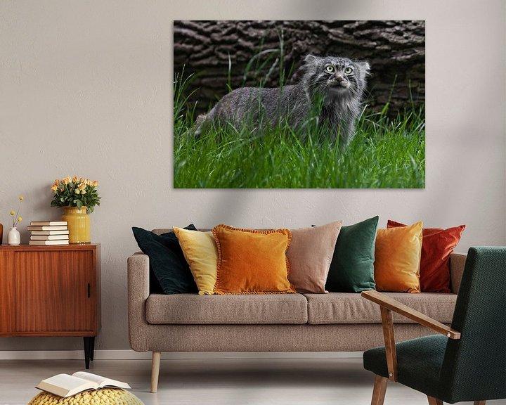 Beispiel: Pallas-Katze oder Pallas-Katze auf einem Hintergrund aus Gras und Holz. grimmiger Blick von Michael Semenov