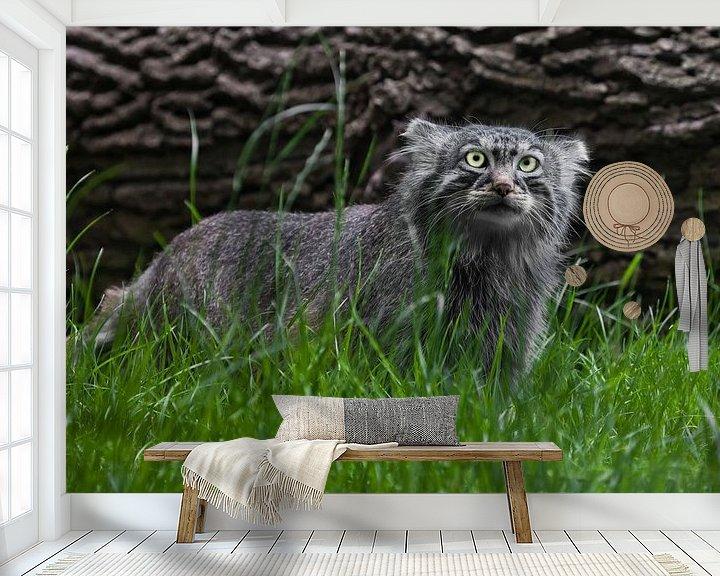 Beispiel fototapete: Pallas-Katze oder Pallas-Katze auf einem Hintergrund aus Gras und Holz. grimmiger Blick von Michael Semenov