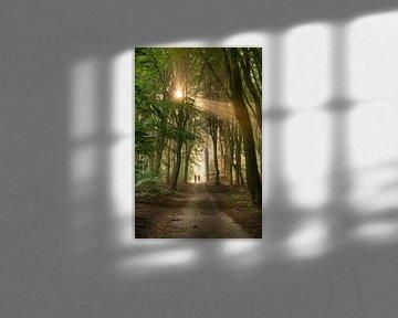 Wandelen naar het licht van Verrassende Fotografie