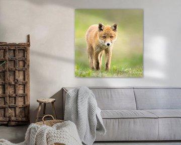 junger Fuchs im Gras von bryan van willigen