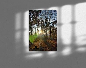 Sonnenlicht in einem Winterwald von Jurjen Jan Snikkenburg