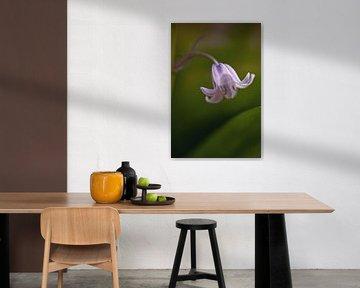 Blume der Waldhyazinthe von Marga Vroom