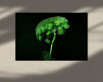 Kuh Petersilie Stillleben im Rampenlicht von Gaby Hendriksz