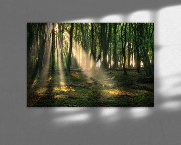 Sonnenharfen im Wald von Ramon Oost