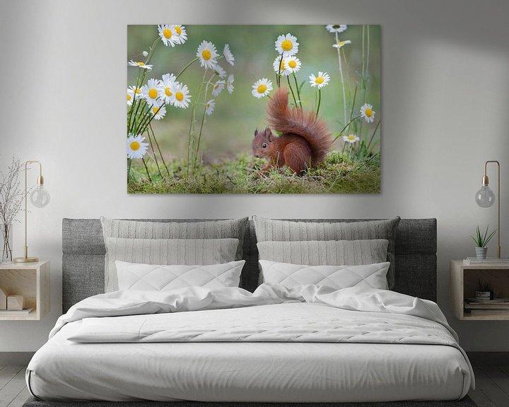 Sfeerimpressie: jong eekhoorntje tussen de margrieten van Ina Hendriks-Schaafsma
