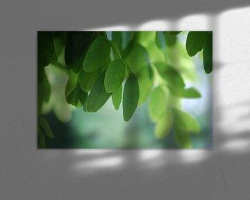 Blätter am Baum! von Be More Outdoor