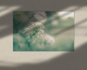 Blumen Teil 136 von Tania Perneel