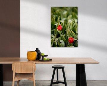 Tulpen mit grünen Blättern auf dem Feld | Naturfoto | Botanisches Design von Karijn | Fine art Natuur en Reis Fotografie