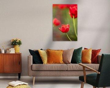 ein Foto einer roten Tulpe | botanisches Design Foto von Karijn | Fine art Natuur en Reis Fotografie