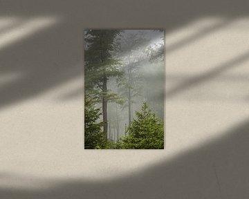 Rothaargebirge - Nebelwald von Jiri Viehmann