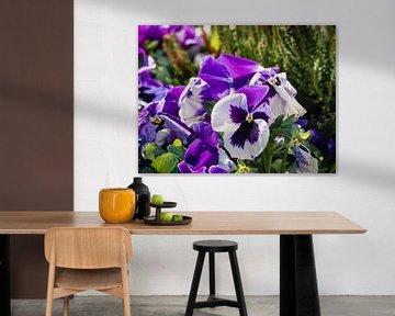Lila Blumen von joost bosmans