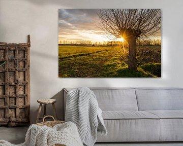 Coucher de soleil et étoile du soleil par saule têtard sur Amy Harper