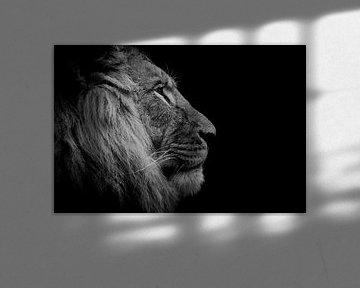 Löwenkopf schwarz und weiß von Claire Groeneveld