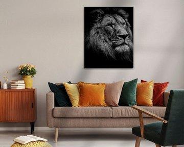 Schöner Löwenkopf von Claire Groeneveld