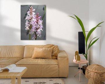 """Soldaatje, kleine orchidee van Janny Schilderink......Atelier """"de Tuute """""""