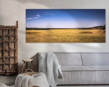 Horizon foto van een veld in de zomer in de felle zon van Jakob Baranowski - Off World Jack