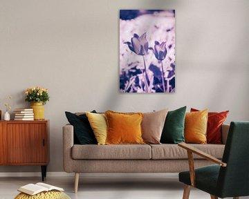 Damen Tulpe - Colorful Flower Power Liliengewächse von Jakob Baranowski - Off World Jack