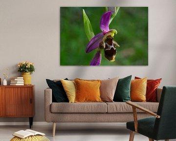 Orchidee rosa Biene von Peter Schoo - Natuur & Landschap