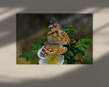 Natuur op Texel - Distelvlinder van Peter Schoo
