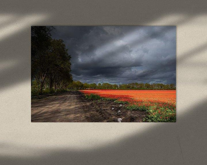 Sfeerimpressie: Dreigende wolkenlucht boven tulpenveld van Coby Koops  natuurkieker.nl