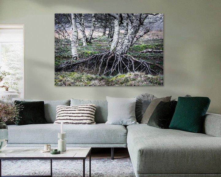 Sfeerimpressie: Berkenbomen  van Coby Koops  natuurkieker.nl
