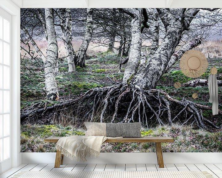 Sfeerimpressie behang: Berkenbomen  van Coby Koops  natuurkieker.nl