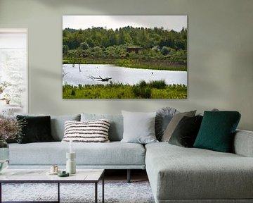 Een blik op de Schotse Hooglanders van FotoGraaG Hanneke