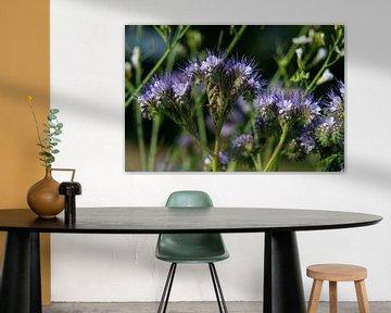 Lila blau blühende Phacelia Wildblumen von JM de Jong-Jansen