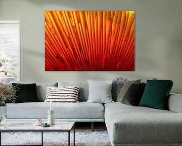 Orange 1 van Colors of the Jungle by Simon Kuyvenhoven