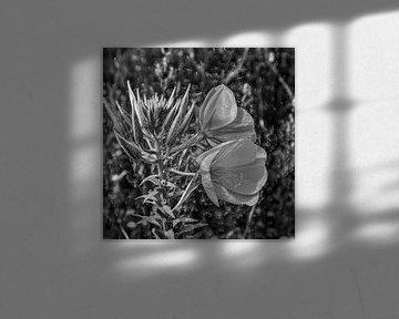 Digital Art Medium Blumen Schwarz und Weiß von Hendrik-Jan Kornelis
