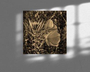 Digital Art Medium Blumen Sepia von Hendrik-Jan Kornelis