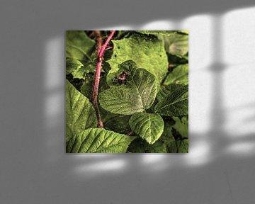 Digital Art Medium Blumen Pflanzen Alt von Hendrik-Jan Kornelis