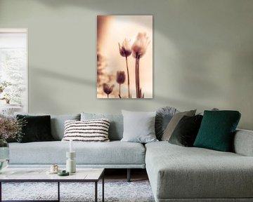 Flower Power - Ein Hauch von Emotionen - stimmungsvolles Blumenmeer aus Tulpen in stiller Trauer von Jakob Baranowski - Off World Jack