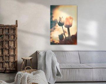 Ein Hauch von Emotionen - stimmungsvolles Blumenmeer aus Tulpen von Jakob Baranowski - Off World Jack