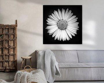 Bloom van Bernd Döbel