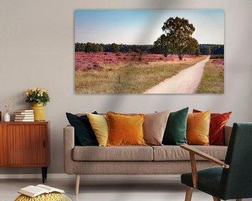 Heide in bloei van Jan van der Knaap