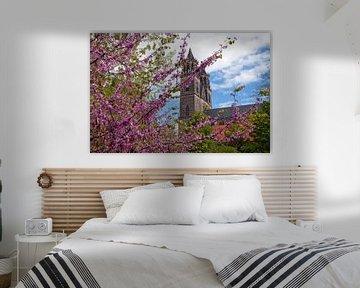 Magdeburger Dom im Frühling von t.ART
