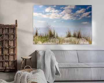 Strandgras aan de Oostzee