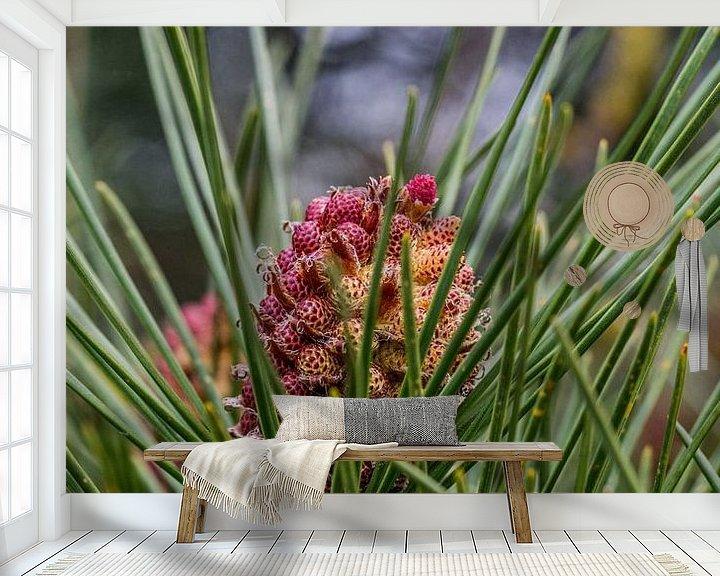 Beispiel fototapete: Tannenzapfen in Blüte 1 von Andre Klooster